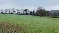 83.67-acre farm for sale, only 500m from Cork-Limerick N20