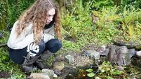 Make a splash and create your own wildlife pond
