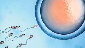 Researchers at the University of Limerick snare better sperm to help treat infertility