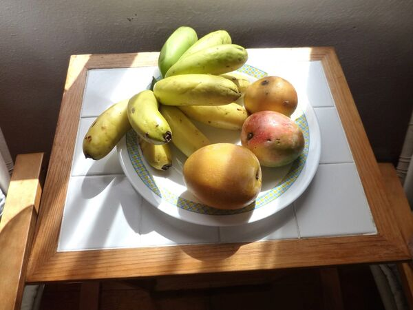 Mangas and stubby Canarian bananas: Mangas are the one to eat; mangoes are stringy and get stuck in the teeth. They're best for juicing. Picture: Damien Enright