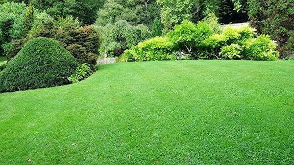 There are likely to be fewer manicured lawns.