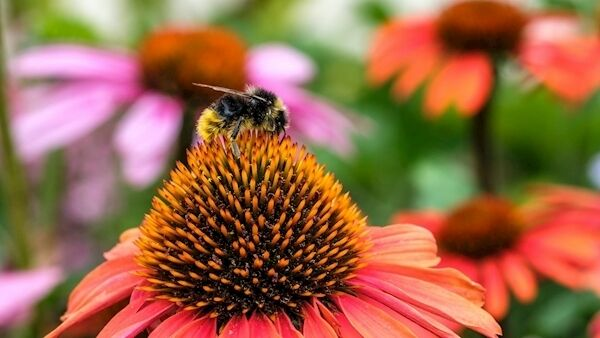 Plants for pollinators will be crucial. Picture: iStock/PA