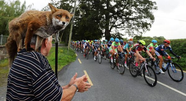 Pat Gibbons with Gráinne the fox watch a stage of the 2017 An Post Rás na mBan in Kilkenny. Picture: Lorraine O'Sullivan