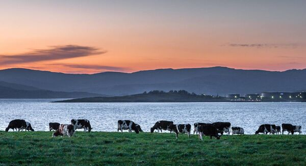 Dusk light settles the mountain range in West Cork while cattle graze in late evening light on the shores of Bantry Bay in County Cork, Ireland. Picture: David Creedon / Anzenberger
