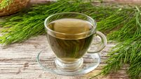 A cup of horsetail tea with fresh Equisetum arvense plant