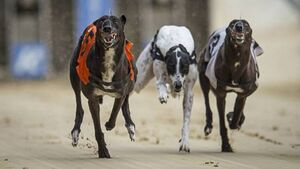 Letter to the Editor: Greyhound allocation same as every year