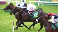 Naas and Leopardstown tips: Master Matt can show winning credentials