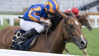 Santiago among 10 Ballydoyle hopefuls in Irish Derby