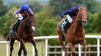 Navan tips: The Blue Panther can make experience count