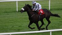 Fairyhouse Tips: Musalsal looks set for compensation