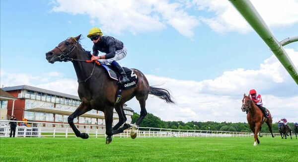 PUSHED ASIDE: Tom Marquand steers English King to victory in the Derby Trial Stakes at Lingfield. However, he won't be on board the Derby favourite at Epsom on Saturday. Picture: Mark Cranham