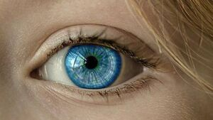 Appliance of Science: 'Why do people have different-coloured eyes?'