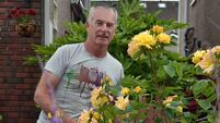 Dermot Ahern: How to transform your garden with creative container planting