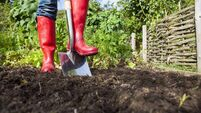 Gardening tips: Dig in and get back to basics