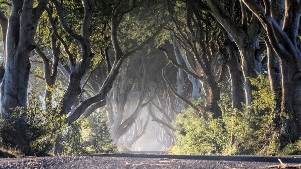 The Dark Hedges is widely photographed likely thanks to its starring role in Game of Thrones.