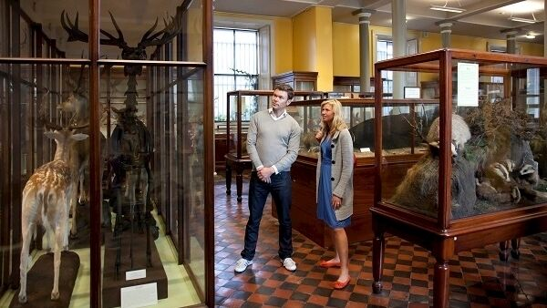 The Natural History Museum is on Merrion Street, where you'll get to see exhibitions exploring living creatures, past and present.
