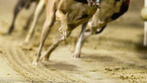 No figures on greyhound deaths until end of 2020