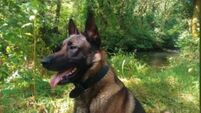 Police dog helps to find elderly couple injured in a ditch