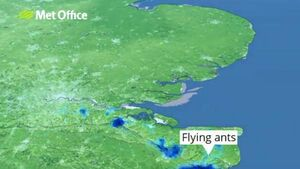 Flying ants won't be coming to Ireland from Britain, says wildlife expert
