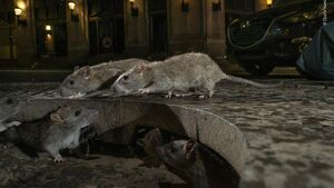 Michael Moynihan: Pest news yet! Giant rats won't overrun Cork city anytime soon