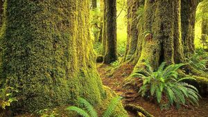 Project aims to improve resilience and quality of sitka spruce forests