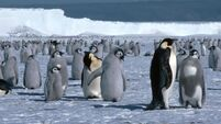Protected areas for penguins urged