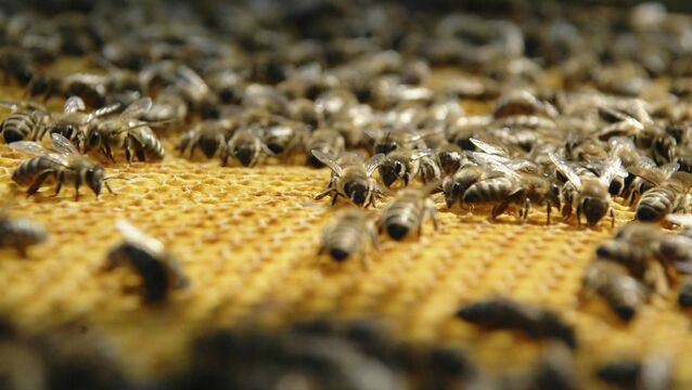 Why 10m EU beehives may have to go