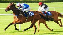 Smart Silky maintains Wachman's winnng run