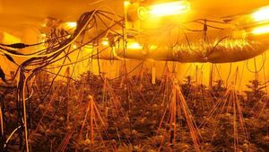 Two arrested following discovery of cannabis grow house in Leitrim