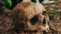 800-year-old human skulls discovered in Limerick
