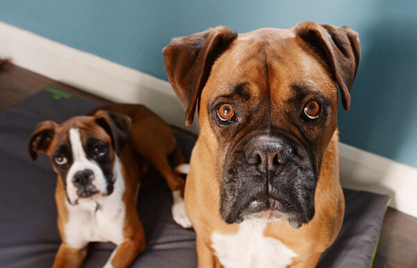 Pooches' paradise: The couple's dogs have their own room.