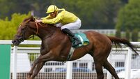 Addeybb on course for another tilt at Champion Stakes
