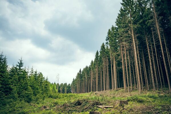 Senator Tim Lombard (Fine Gael) said the timber industry running out of raw material is already reality, with the GP Wood sawmill in Enniskeane, Co Cork, employing 500, to reduce operations to only four days this week, and then going to three-day and two-day weeks. Picture: iStock