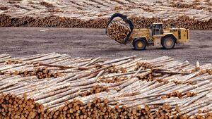Why Ireland is running out of timber