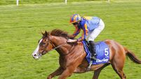 Aidan O'Brien sounds Arc ground warning for Love