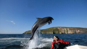 What Fungie did for us: How the Dingle dolphin left us with a parting gift
