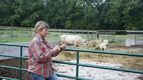 A female beef farmer using a cell phone outside a cattle pen