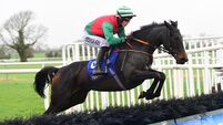 Clonmel Tips: Sweet Sting can carry top weight to success