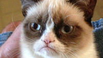 Grumpy Cat  - The Movie!