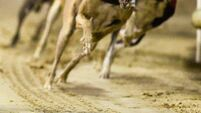 Letters to the editor: State must stop funding greyhound industry
