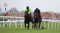 Ladbrokes Winter Carnival Gallops Morning - Newbury Racecourse