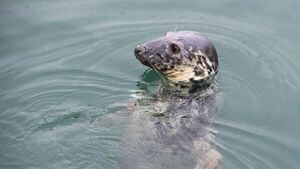 Beheaded seals discovered on Kerry beach