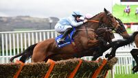 Weekend tips: Indigo can breeze home in maiden hurdle at Fairyhouse