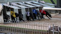 Letter to the Editor: Claims greyhound tracks predicted to lose €30m a 'misrepresentation'