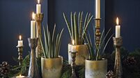Here's how to give your houseplants a festive makeover