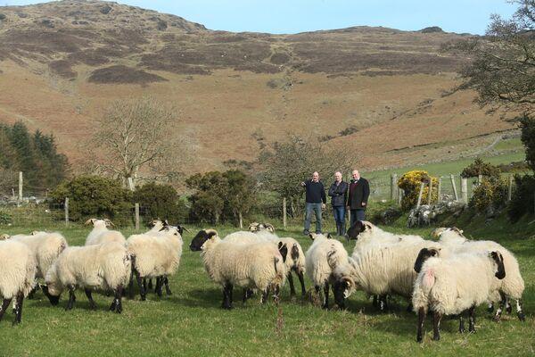 Même le chien le plus placide peut constituer une menace pour les moutons.