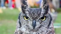 Waterstones: 'Fleets of trained owls' to deliver books