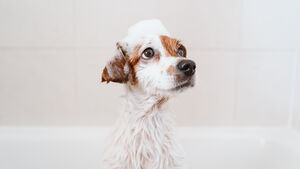 Pet Corner: How to master DIY dog grooming at home