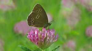 6 ways to rewild your garden and help save butterflies