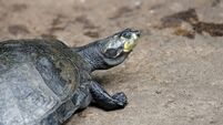 Concerns raised at National Reptile Zoo as four turtles die in 48 hours